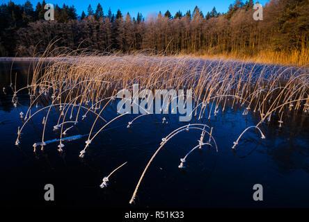 Der frühe Winter morgen Licht bei Hvalbukt im See Vansjø, Østfold, Norwegen. Vansjø ist ein Teil des Wassers, das System namens Morsavassdraget. - Stockfoto