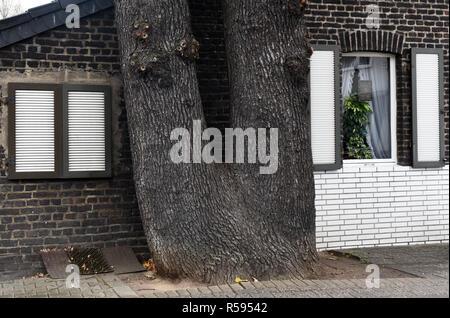 29. November 2018, Nordrhein-Westfalen, Düsseldorf: ein Doppelzimmer - der Stamm der Eiche steht ganz in der Nähe der Giebelwand eines kleinen brick House. Foto: Horst Ossinger //dpa