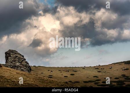 Sar-Berge, SAR planina, Mazedonien - Gemischte Herde Schafe und Rinder weiden auf unter dem bewölkten Himmel - Stockfoto