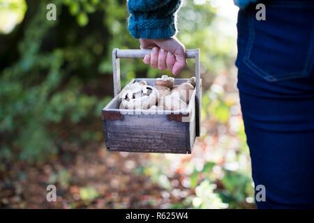 Nahaufnahme von Frau mit Holz- Baket von frisch gepflückten Pilzen - Stockfoto