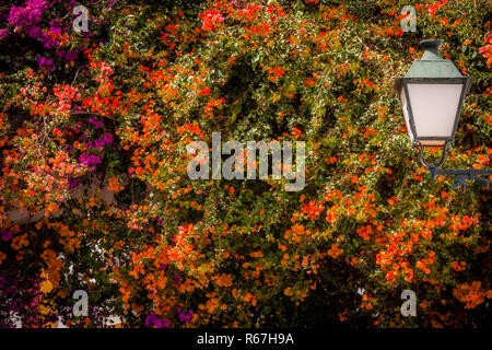 Laterne und bunten Blumen - Stockfoto