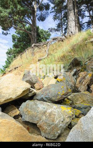 Stein und Felsen Struktur unter Bäumen in Wäldern auf Frankreich Küste, Landschaft colseup - Stockfoto