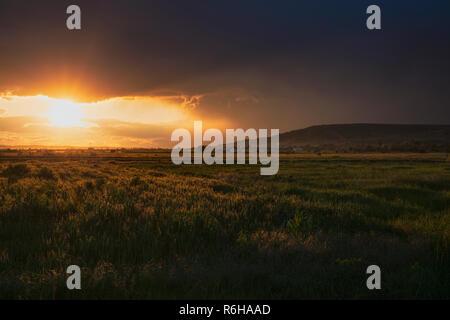 Dramatischer Sonnenuntergang über Weizenfeld. - Stockfoto