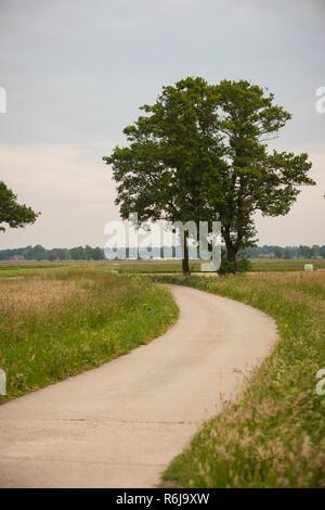 Alte Eichen an der Seite der Straße, wo die Landstraße Kurven um in einem revolvierenden Art und Weise. Atmosphärische landscapse Szene, zeigt spiegeln - Stockfoto