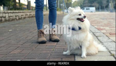 Frau ausgehen mit pomeranian Hund - Stockfoto
