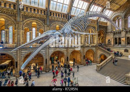 Natural History Museum, Kensington London - Stockfoto