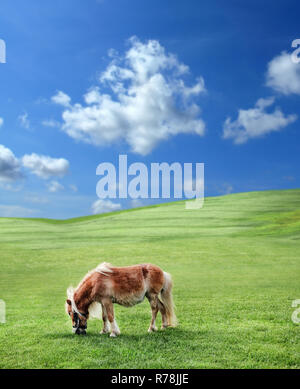 Pony in der Natur - Stockfoto