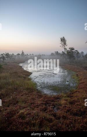 Sonnenaufgang mit Nebel im Sumpf, Moor mit einsamen Kiefern und kleine Teiche im Feld mit Nebel - Stockfoto