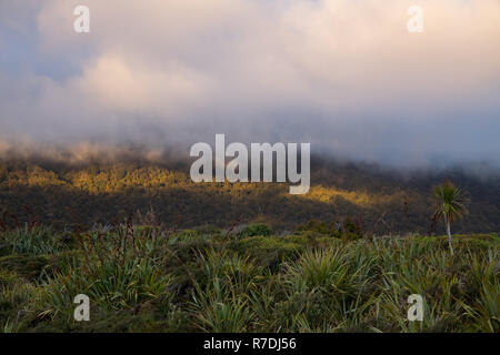 Sonnenuntergang über Native Bush im Fjordland National Park, Neuseeland