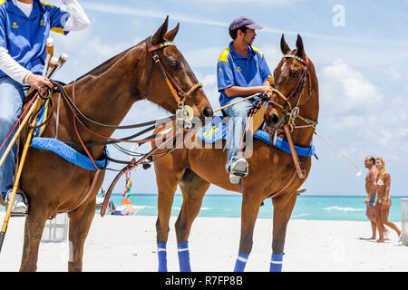 Miami Beach, Florida Polo World Cup Spiele Sport Turnier Reiterfall sand Feld Horse Pony Bräutigam trainer Hispanic Mann nicht - Stockfoto