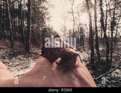 Eine Silhouette von Hand mit einem auumn maple leaf mit Sonnenlicht durch das obere Ende zu kommen. Verschwommenes Bild Hintergrund des Waldes im Sunrise - Stockfoto