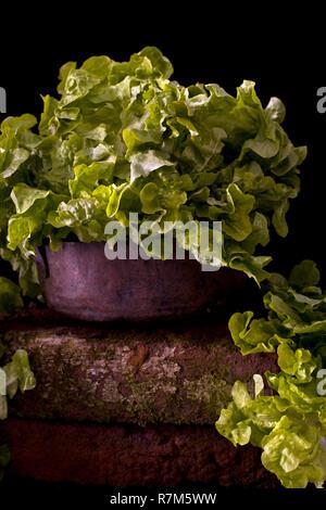 Auf eine Schüssel vor einem schwarzen Hintergrund Kopfsalat - Stockfoto