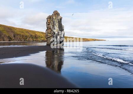 Hvítserkur steinbogen am Strand, Island
