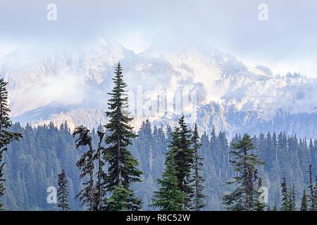 Große Kiefern mit einer Bergkette im Hintergrund - Stockfoto