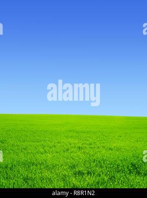Schönen Sommer Landschaft. Ein grünes Feld, blauer Himmel - Stockfoto