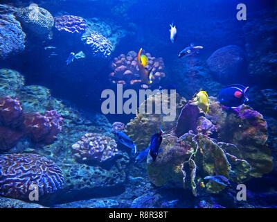 Closeup schöne Szene von Unterseeischen Korallenriff mit Seefisch - Stockfoto