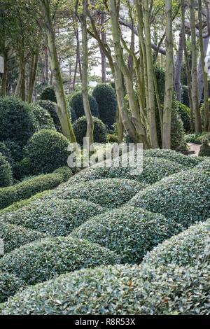 Frankreich Seine Maritime Etretat Etretat Garten Stockfoto Bild