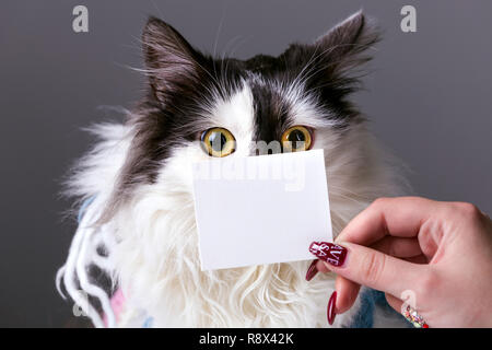 Schwarz und Weiß lustige Katze mit Pappe auf die Schnauze - Stockfoto