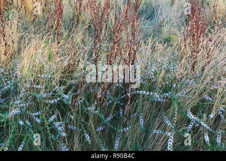 Detail der wildflower Meadow und Gräser in der Morgendämmerung, Tamales Bay, Point Reyes National Seashore, Kalifornien, USA. - Stockfoto