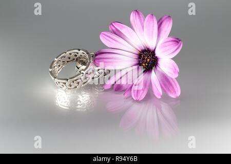 Silber Verlobungsringe mit irischen Ornamente und daisybush (Osteospermum barberiae) flowerhead - Stockfoto