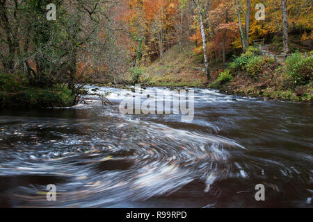 River Wharfe durch Strid Holz im Herbst in Bolton Abbey, North Yorkshire Dales - Stockfoto