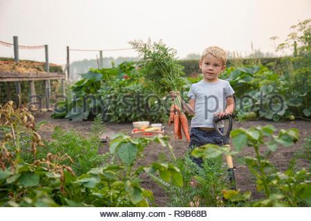 Portrait Junge ernten frische Karotten in ländlichen Gemüsegarten - Stockfoto