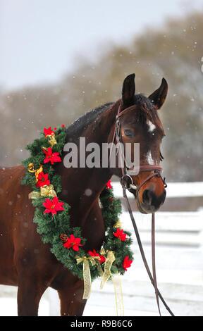 wei es pferd tragen santa weihnachtsm tze kopf geschossen. Black Bedroom Furniture Sets. Home Design Ideas