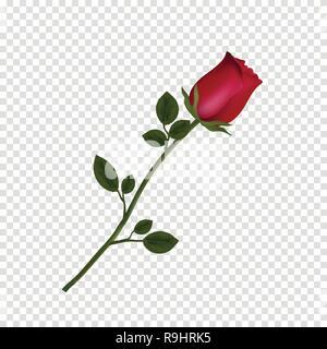 Vector Illustration von photo-realistisch, sehr detaillierte Blume der roten Rose auf transparentem Hintergrund isoliert. Schöne bud Der rote Rose auf langem Stiel. - Stockfoto