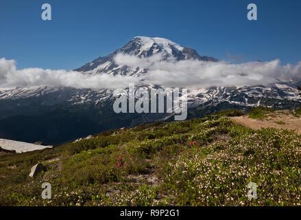 WA 15604-00 ... WASHINGTON - Heidekraut blüht auf der Seite der Plummer Peak im Bereich von tatoosh Mount Rainier National Park. - Stockfoto