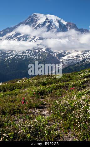 WA 15605-00 ... WASHINGTON - Heidekraut blüht auf der Seite der Plummer Peak im Bereich von tatoosh Mount Rainier National Park. - Stockfoto