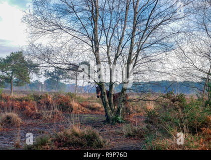 Upton Heide, 27. Dezember 2018 einen angenehmen Tag. - Stockfoto