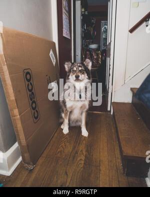 Husky Hund - Stockfoto