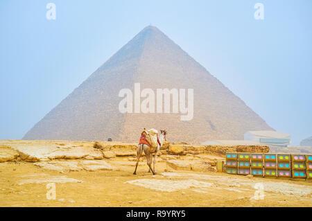 Die einsamen Kamel steht an der Beleuchtung für die Nacht zeigen und die Cheops Pyramide auf dem Hintergrund, Giza, Ägypten - Stockfoto