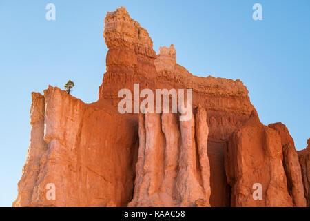 Lone Pine Tree wächst auf Hoodoo Kalkstein Felsformationen und 'Flossen' im Bryce Canyon National Park, Utah, USA - Stockfoto