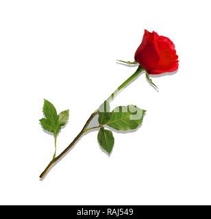 Abbildung: foto-realistische, sehr detaillierte Blume der rote Rose auf weißem Hintergrund. Schöne bud Der rote Rose auf langem Stiel. Clip Art für - Stockfoto
