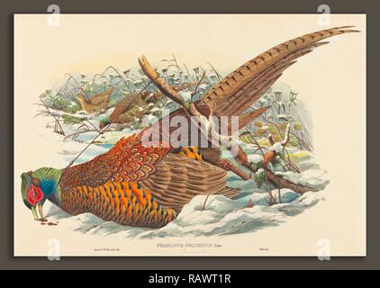 John Gould und W. Hart (Briten, aktiv 1851 - 1898), Phasianus colchicus (Ring-necked Pheasant), handkolorierte Neuerfundene - Stockfoto
