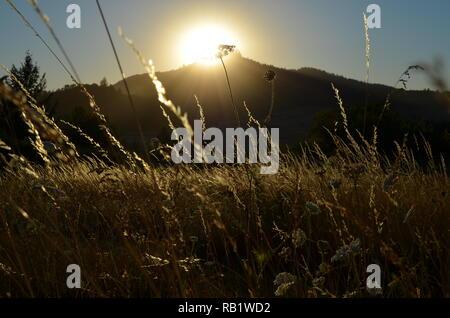 Sommer Gräser in der glühenden Sonne über Butte. - Stockfoto