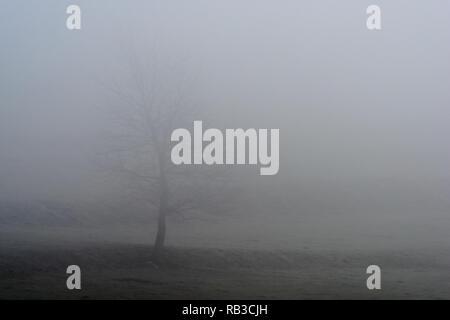 Ein Baum auf der Piste im Nebel am Morgen - Stockfoto