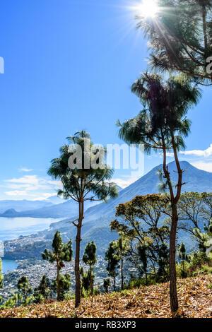 Sunburst durch Baum- und Blick auf den Lake Atitlan See & 5 Vulkane durch Mais Feld im guatemaltekischen Hochland. - Stockfoto