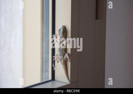 Der Blick auf eine Eidechse in einem Fenster. - Stockfoto