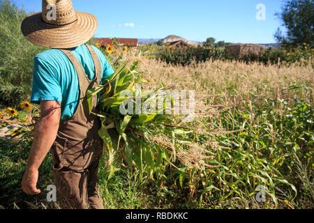 Ein Bauer einen Hut tragen und Overalls hält ein großes Bündel von hohen Unkraut unter dem Arm auf einem Bio-bauernhof Feld - Stockfoto