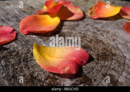Heart-shaped auf einem Baumstamm Rosenblüte - Stockfoto