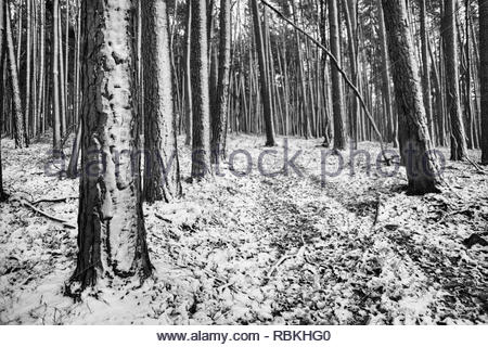 Ein Pfad durch den verschneiten Bayerischen Wald in Schwarz und Weiß im Winter - Stockfoto