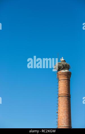 Paar Störche im Nest auf dem Schornstein gegen crear Sky - Stockfoto