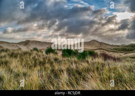 Dünen auf der nordfriesischen Insel Amrum in Deutschland - Stockfoto