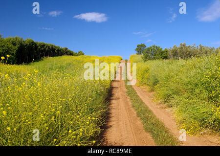 Unbefestigte Straße durch Felder, Chalkidiki, Griechenland, Europa - Stockfoto