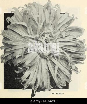 . Dreer der Floristen specials einschließlich blumensamen für frühe Aussaat Begonien, Cannas, Dahlien, Hortensien, Rosen usw., usw. Blumen Kataloge; Begonien, Dahlien Samen Samen Kataloge Kataloge. DREER BLUMENGESCHÄFTE BLUMEN SAMEN 3. ASTERMUM Astermum Astern diese Belastung der riesigen Kometen Astern zuerst an der Floristen Übereinkommen im Jahre 1912 ausgestellt wurde, und ihre enorme Größe und Chrysantheme - wie Aussehen Furore erstellt. Die Lager bieten wir aus Samen vom Originator beschafft angebaut wurde und wurde, wie wir glauben, unter unserer Obhut verbessert, die Farben, die etwas gemischt wurden sorgfältig tr