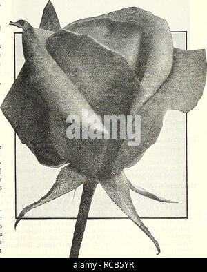 . Dreer ist Herbst Katalog 1929. Die Glühbirnen (Pflanzen) Kataloge; Blumen Samen Kataloge; Gartengeräte und Zubehör Kataloge; Baumschulen (Gartenbau) Kataloge; Gemüse Samen Kataloge. Golden Dawn, der neuen australischen Hybrid-Tea Fröhlichkeit (E. G. Hill Co., 1926). Knospen, lang und spitz, die Entwicklung zu einem großen formschöne Halbgefüllte, schalenförmig, sehr dauerhafte Blume aus gekräuselten Blütenblättern, wie sie sich entfalten zeigen verschiedene Schattierungen von Orange, indisch rot, gelb und rosa oder fawn. Die Anlage ist von starken, kräftigen Verzweigung, mit gutes gesundes Laub und Sehr reichblühend. $ 1,50. Gladys Benskin - Stockfoto