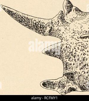 . Die Stämme der Wirbeltiere. Evolution; Paläontologie; Wirbeltiere. . Bitte beachten Sie, dass diese Bilder sind von der gescannten Seite Bilder, die digital für die Lesbarkeit verbessert haben mögen - Färbung und Aussehen dieser Abbildungen können nicht perfekt dem Original ähneln. extrahiert. Othenio Abel, 1875-1946. Berlin W. De Gruyter
