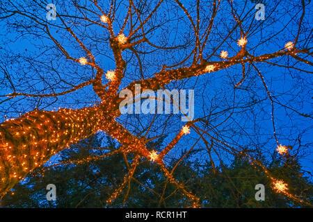 Weihnachtsbeleuchtung, Capilano Suspension Bridge Park, North Vancouver, British Columbia, Kanada - Stockfoto
